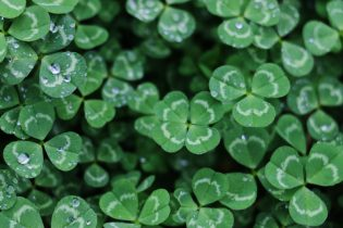 Green Wishes of the Day