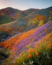 The Super Bloom of California