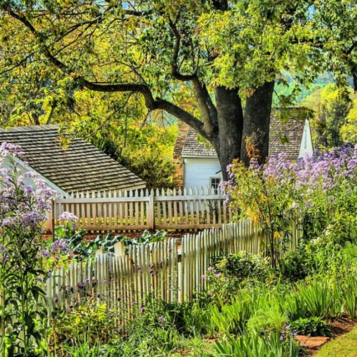 garden by fence