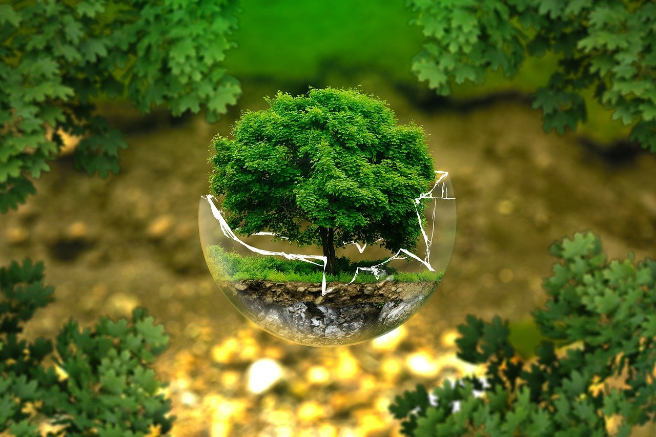 climate change tree in broken glass ball