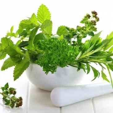 fresh-herbs-top-5-365x365