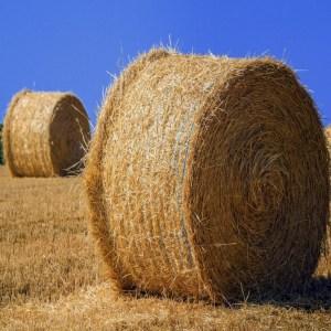 Siatki rolnicze