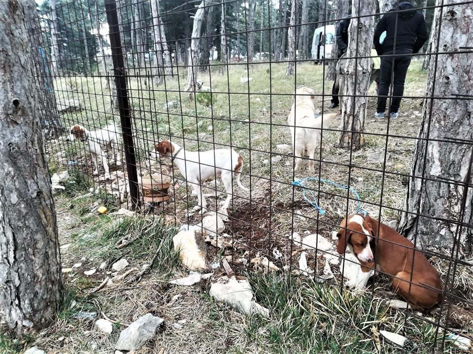Benkovački sajam na udaru kritika ljubitelja životinja