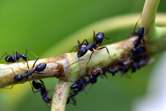 Ameisenöl gegen Ameisen.
