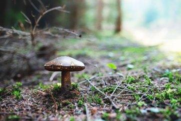 "Pilze sammeln – Almhütte ""Brandnerhütte"""