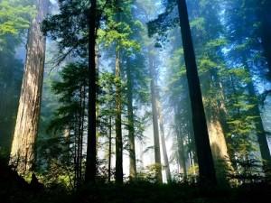 karakter wilayah hutan hujan tropis ditunjukkan dengan dekomposisi yang cepat. Karena itulah cara mengawetkan kayu yang dilaku.kan harus benar
