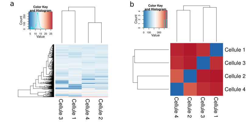 Clustering de 4 single-cell RNAseq (a- expression des gènes; b- distance euclidienne) (CC BY SA Isabelle Stévant