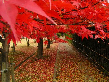 Red leaves by hexion (CC BY-NC-SA 2.0)