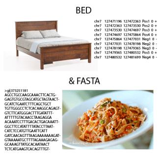 bed&fasta