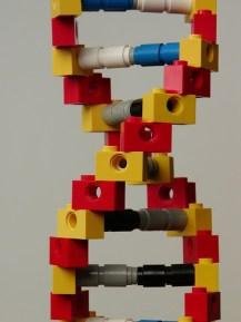 ADN légo par mknowels (https://www.flickr.com/photos/mknowles/)