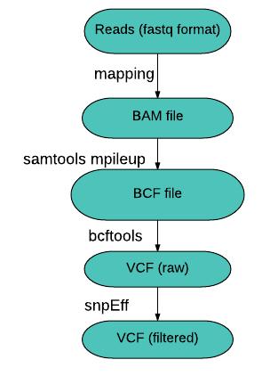 Pipeline d'analyse de SNPs