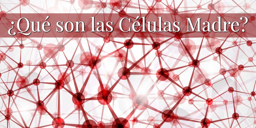 ¿Qué exactamente son las Células Madre?