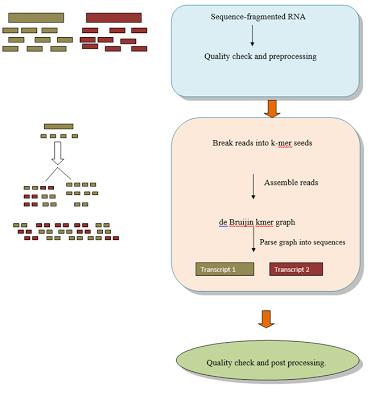 De-Novo Transcriptome Assembly and Annotation