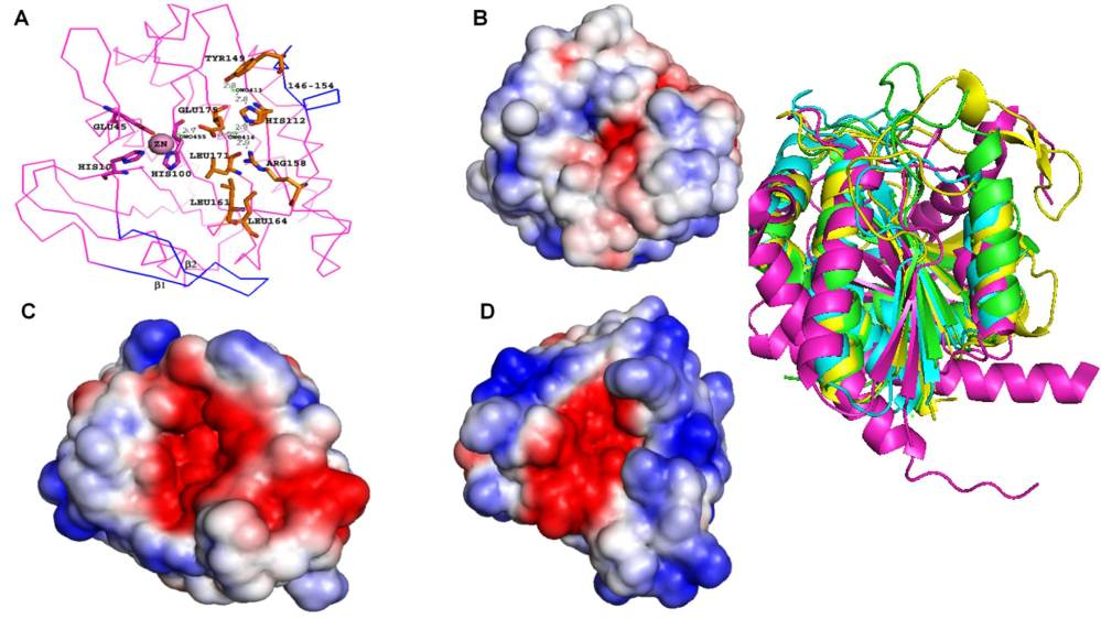 Functional Annotation of Hypothetical proteins (2/3)