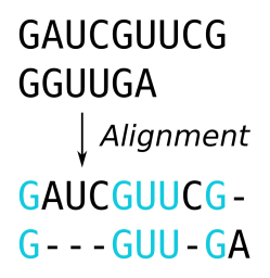 Alignment zweier RNA Sequenzen.