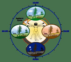 Biologische Uhr des Menschen