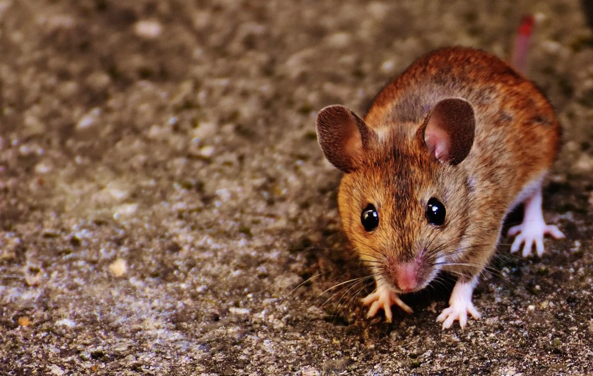 Von Mäusen, Bäumen, Viren und Co.