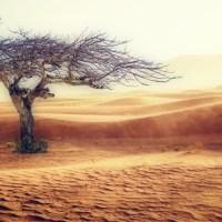 Wie das Klima die Gene beeinflusst