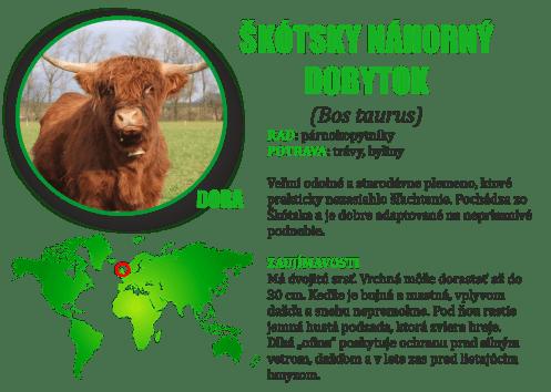 Skotsky nahorny dobytok