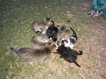 To je velka rodina maciek