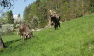 Tierhaltung und Weidemanagement im Bio Landbau