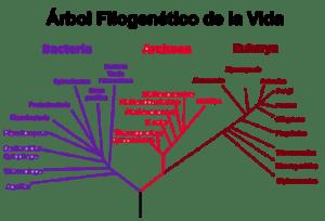 Clasificación biológica: los Dominios | La guía de Biología