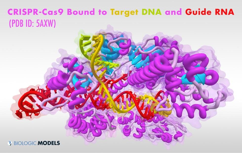 CRISPR, Cas9, Biologic Models,