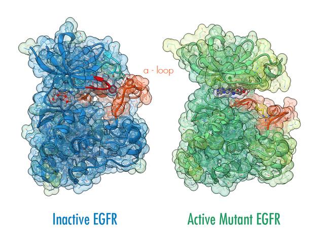 EGFR Ribbon Visualization