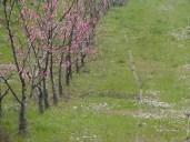 Peschi 07-03-2014