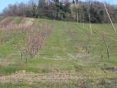 Peschi 11-03-2014