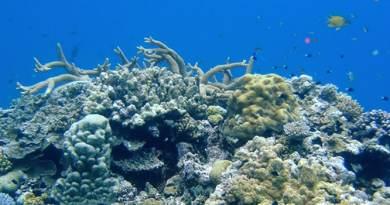 photo de corail par Bastien Mérigot