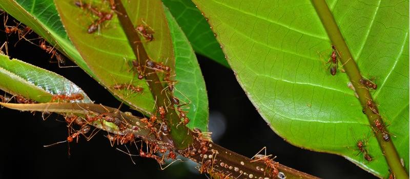 fourmis en forêt - Photo Thibaud Decaens