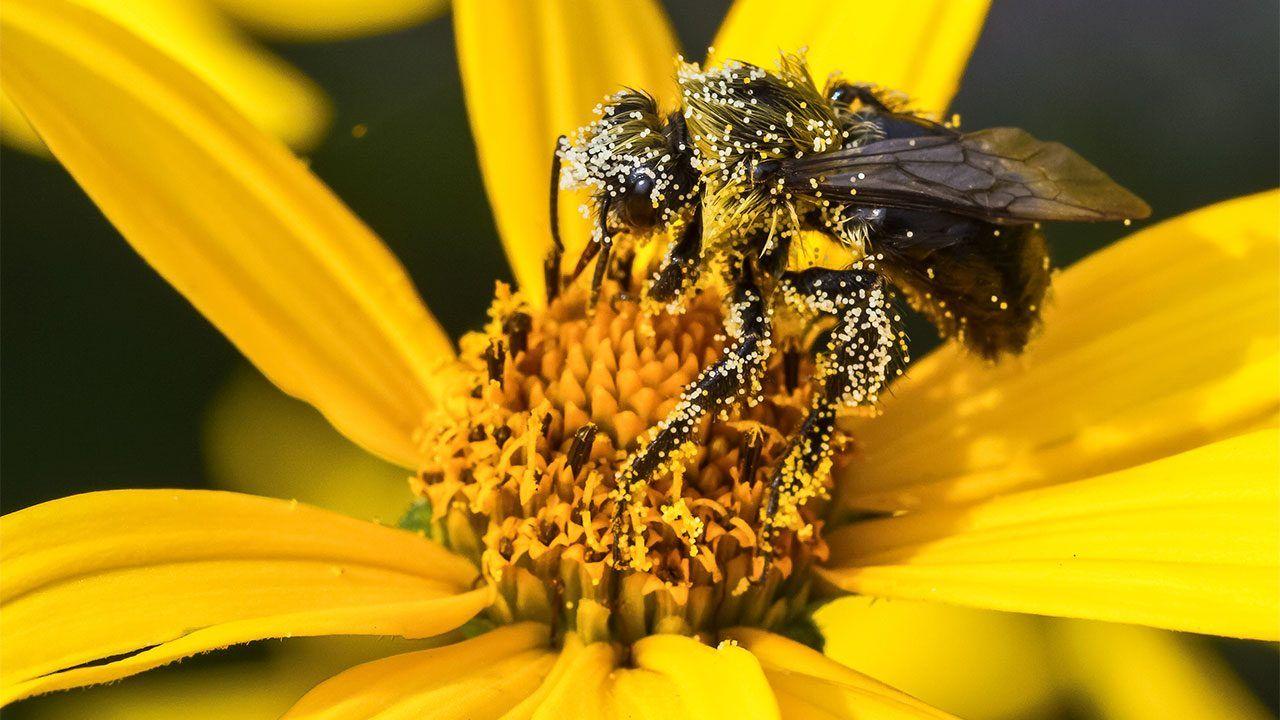 Ко се све храни нектаром?