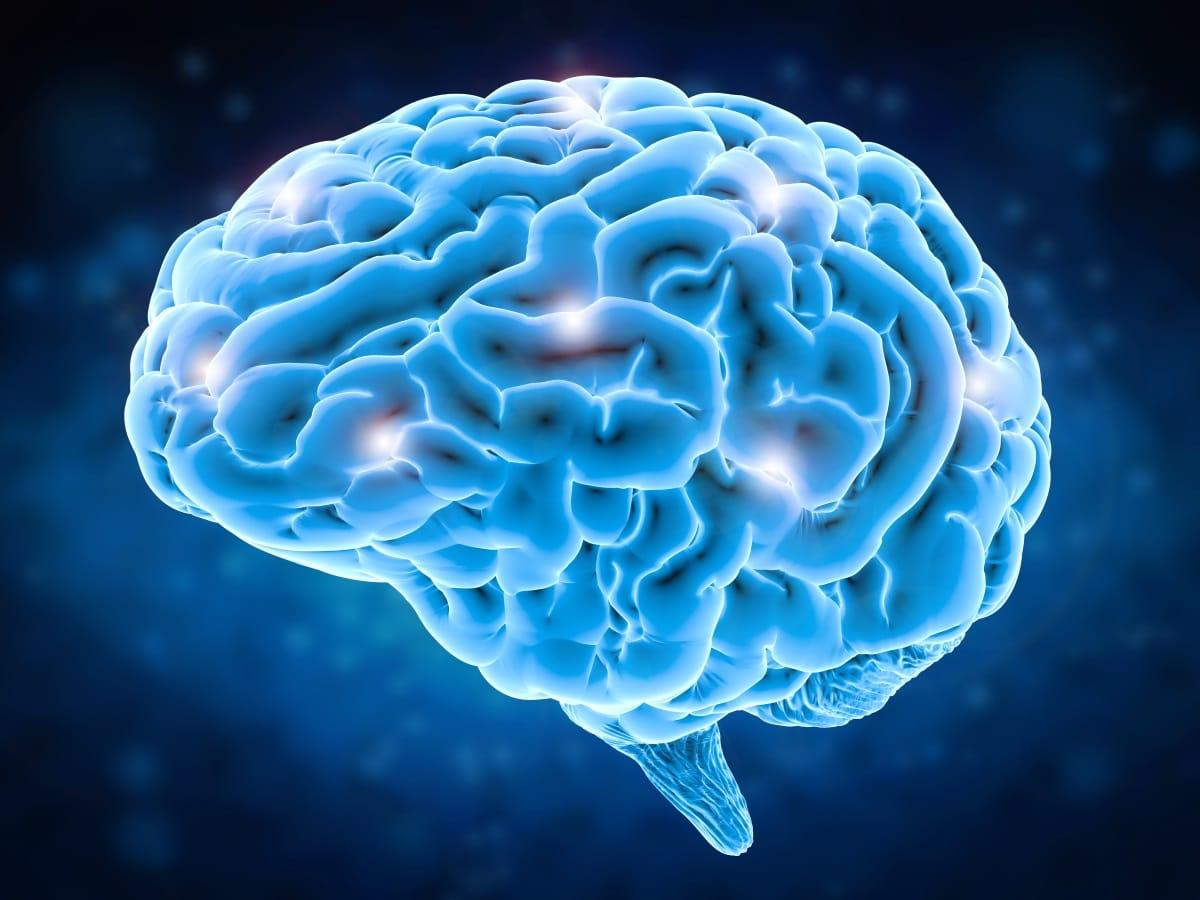Да ли генетика утиче и на величину мозга?