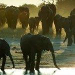 A jornada de um bebê elefante