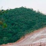 Os vilões do desmatamento