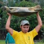 Centenas de Animais Devolvidos à Floresta