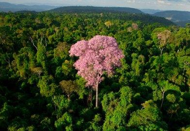 Zerar desmatamento não impacta economia