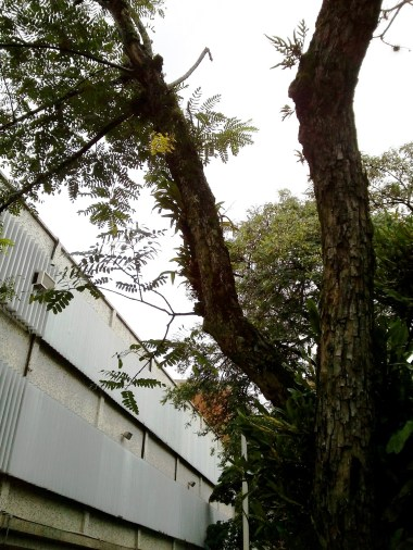 Orquídea amarela contrastando com o dia acinzentado