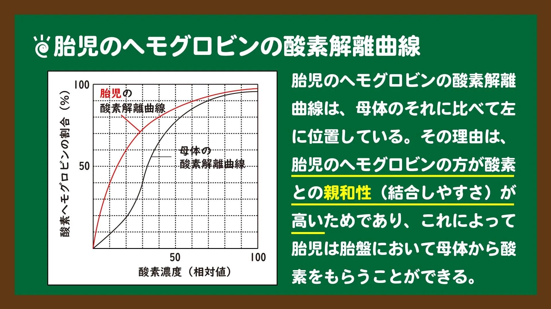 スライド13:胎児のヘモグロビンの酸素解離曲線