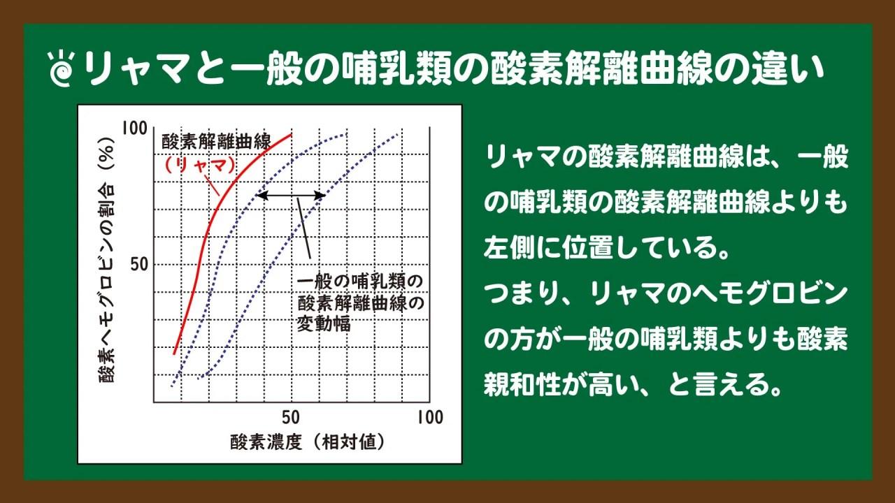 リャマと一般の哺乳類の酸素解離曲線の違い