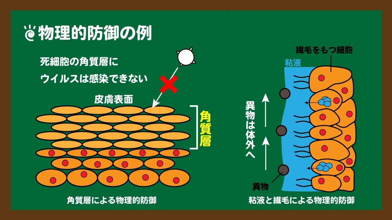 スライド2:物理的防御の例