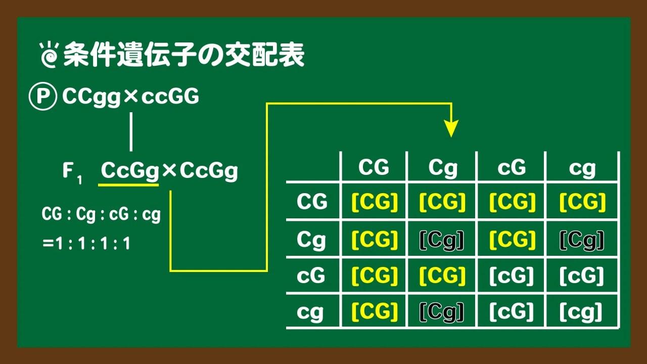 スライド3:条件遺伝子の問題の交配表