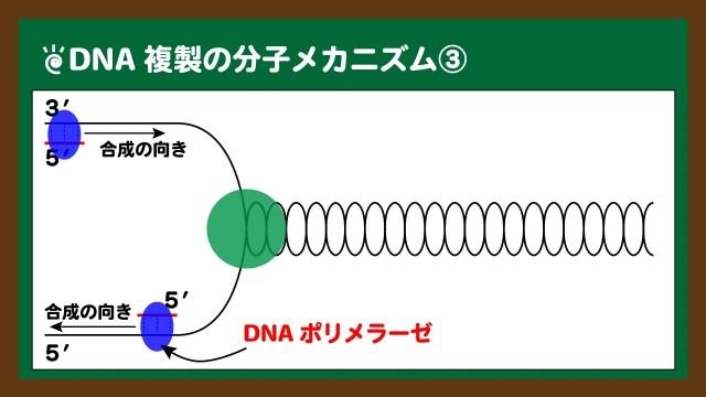 図.プライマーにDNAポリメラーゼが結合し、新生鎖が合成される