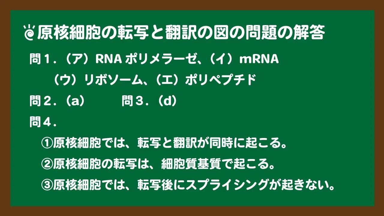 スライド2:原核細胞の転写と翻訳の問題の解答