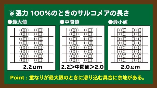 スライド8:張力100%のときのサルコメアの長さ