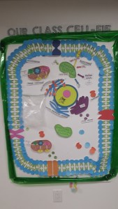 Plant Cell 2