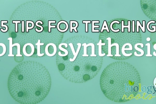 5 Helpful Tips for Teaching Photosynthesis