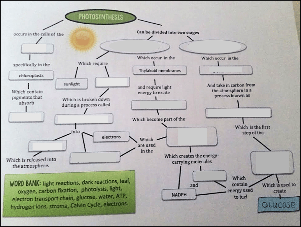 5 helpful tips for teaching photosynthesis photosynthesis graphic organizer ccuart Choice Image