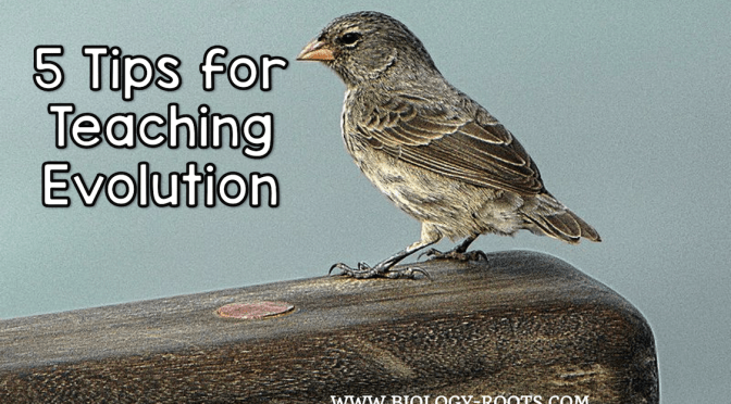 5 Helpful Tips for Teaching Evolution